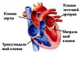 Приобретенный порок сердца: симптомы и лечение